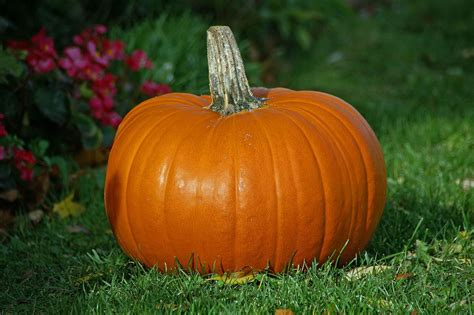 pumpkin facts pumpkin facts for facts for