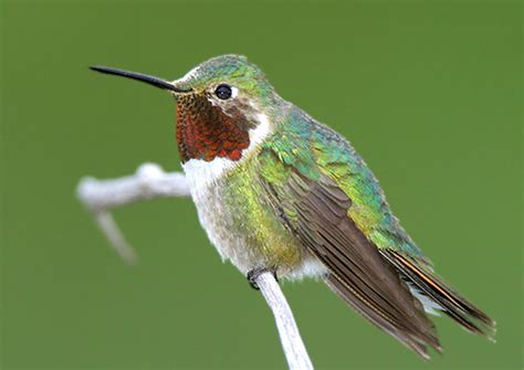 top 28 when do hummingbirds return to indiana
