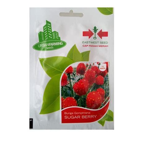 Benih Cabe Cap Bunga Matahari benih bunga gomphrena sugar berry 15 biji panah merah
