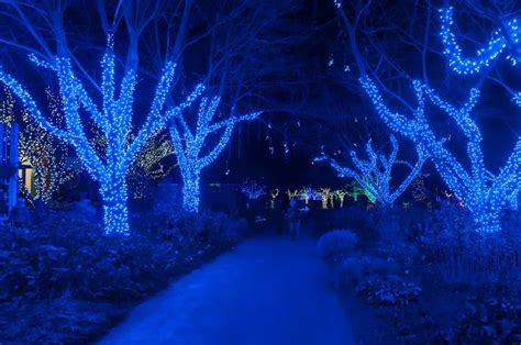 meadowlark botanical gardens meadowlark s winter walk of lights 11 best meadowlark botanical gardens images on