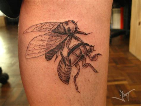cicada tattoo cicada shell