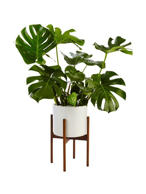 indoor plants for the home pinterest low lights extraordinary 70 popular tropical house plants