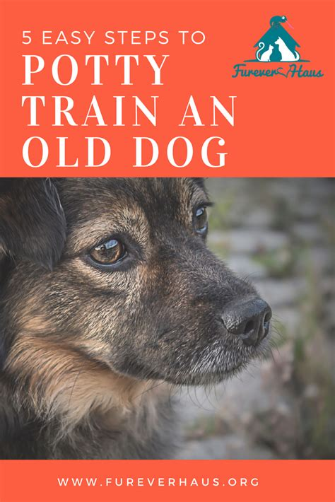 easiest small dog to house train 5 easy steps to house train your old dog patience love care