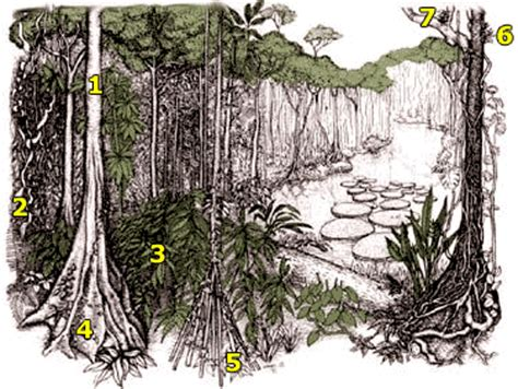tropical forest plant adaptations plant adaptations
