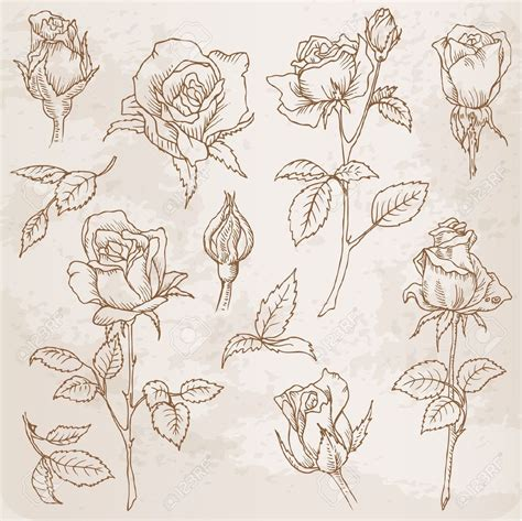 rose bud tattoo flower set detailed roses in vector whoa