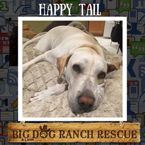 big rescue ranch big ranch rescue inc nonprofit in loxahatchee fl volunteer read reviews