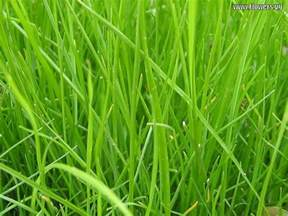 kelsey chen grass background