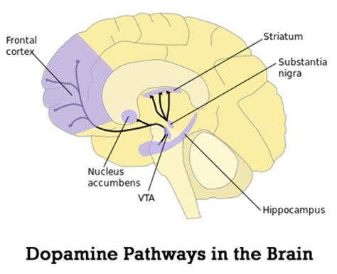 what role does dopamine play in addiction?