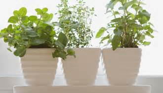 Window Sill Herb Garden Pots Growing An Herb Garden Epicurious Epicurious