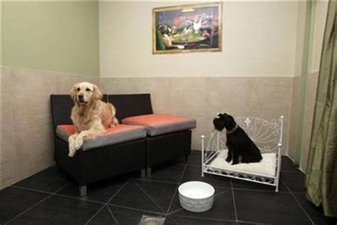 puppy hotel best ten pet hotels that your pets would to stay in elite choice