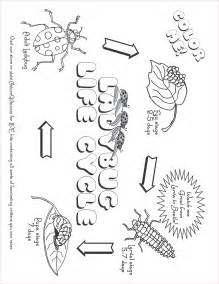 The ladybug life cycle diagram label the ladybug life cycle diagram
