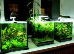 fish tank mates 20 gallon ? want a betta on Pinterest   Betta Tank
