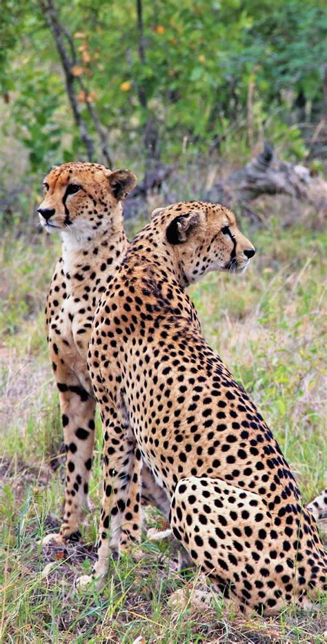 Gamis Sabrina Two Tone the ultimate guide to wildlife safari in south africa