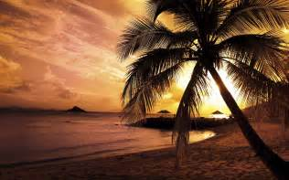Palm Tree Wallpaper Palm Tree Sunset Wallpapers