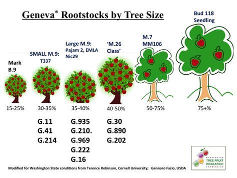 tree varieties comparison tree varieties comparison 28 images plums plums plums