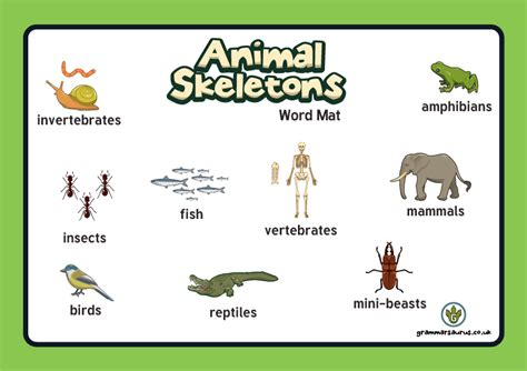 new year animals uk new year 3 science animals including humans word mat