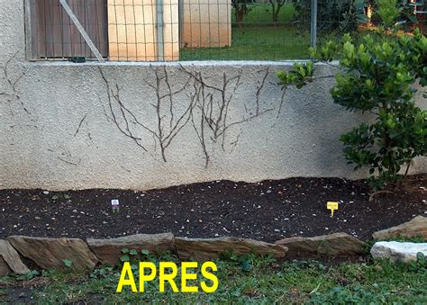 amenagement du jardin
