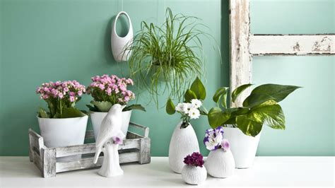 vasi a parete dalani vasi da parete giardino verticale in casa