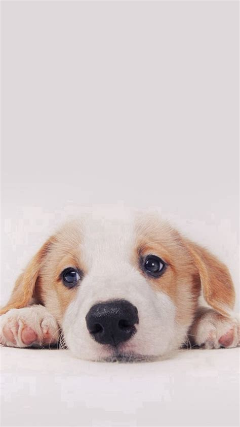 cute puppy dog pet iphone 6 plus wallpaper iphone 6 cute dog wallpaper iphone wallpaper sportstle