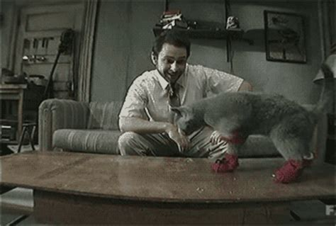 cat in sock gif day cat gif find on giphy