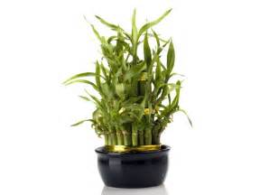 office desk plant notes of asha das lucky plants for your office desk
