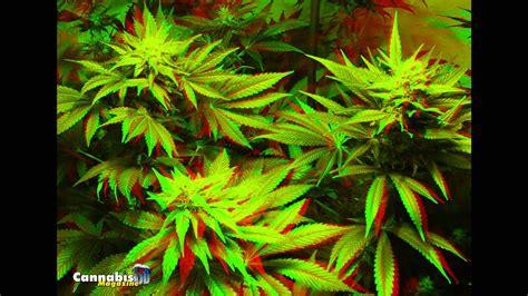 imagenes en 3d animadas marihuana 3d 183 3d weed 183 cannabis magazine youtube