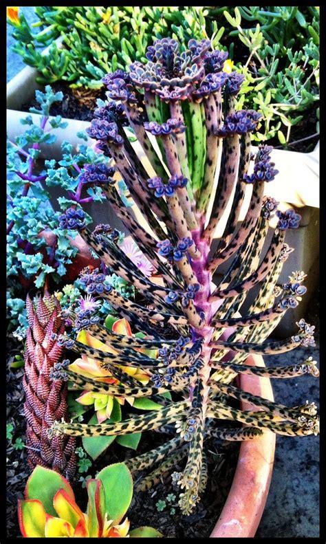 colorful plants colorful succulents plants