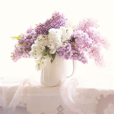 lilac photograph shabby chic decor still life floral