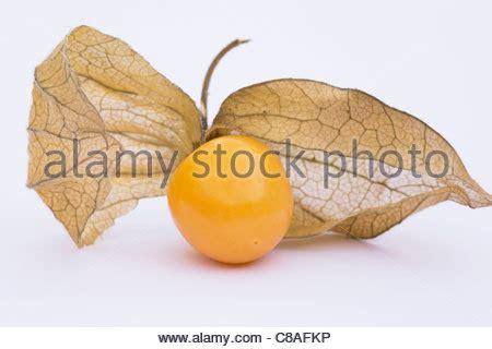 physalis cape gooseberry fruit fresh seasonal tropical