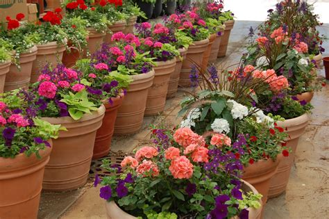 Best Plants For Patios by Plants For Patio Newsonair Org