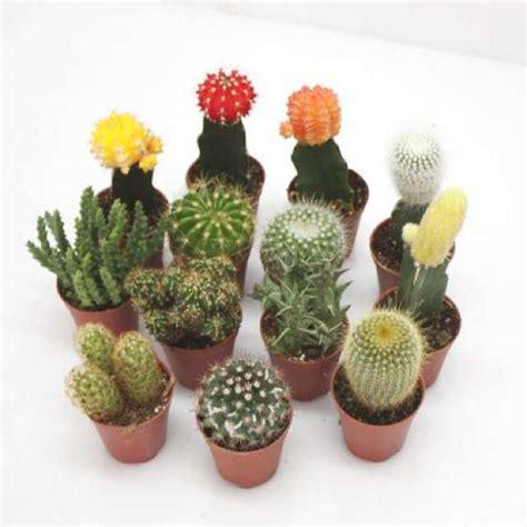 diy a mini cactus garden trendsurvivor