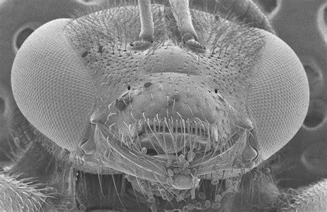 ultra high resolution scanning electron microscope su8200 series