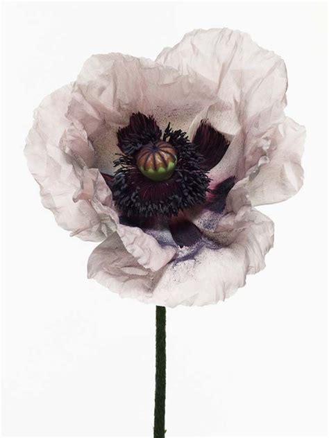 Penn Search Irving Penn Flowers Search Dearest M 229 Lningar M 246 Nster Och