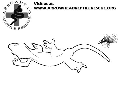 Arrowhead Reptile Rescue Gecko Insect Coloring Page