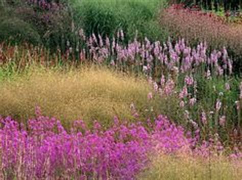 Lorjuk By Toko Roy 88 deschsia cespitosa goldtau and liatris spicata in one