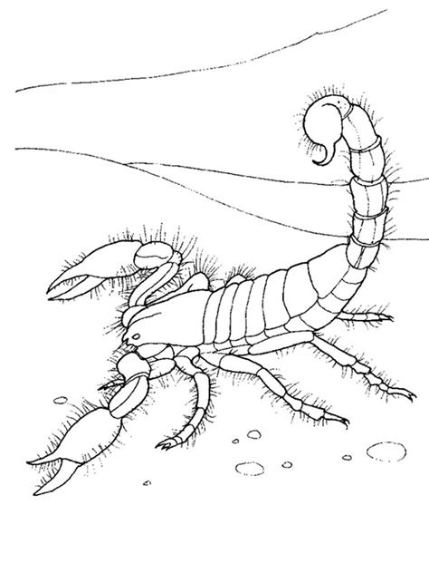 Printable Coloring Pages by Free Printable Scorpion Coloring Pages For