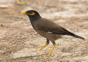 birds pictures uae birds