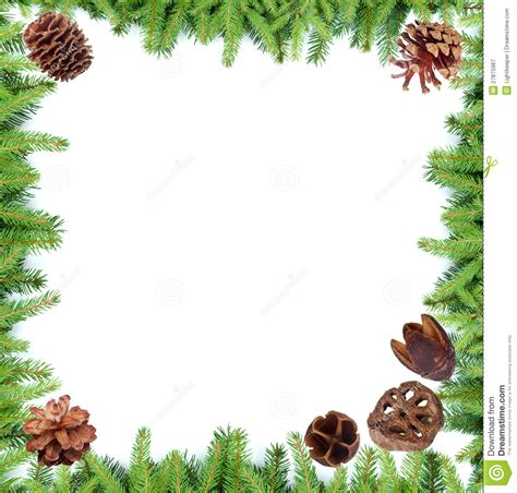 alternate christmas tree picture frame fir tree branches frame stock image image of border 27875967