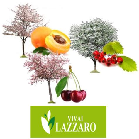 vivai piante da frutto piante da frutto vivai lazzaro pd