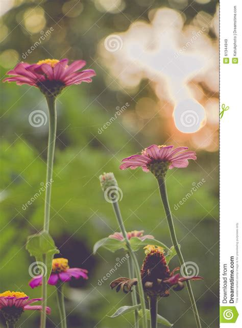 flower wallpaper effect vintage photo of nature background with wild flowers and