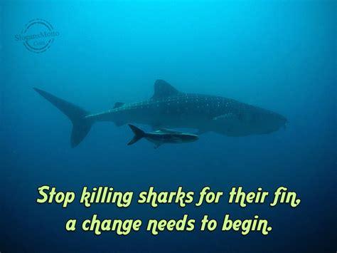 baby shark urban dictionary slogans for saving animals page 6
