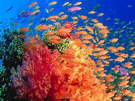 posiedon undersea resort 1 top 5 underwater resorts posiedon undersea resort 1 top 5 underwater resorts