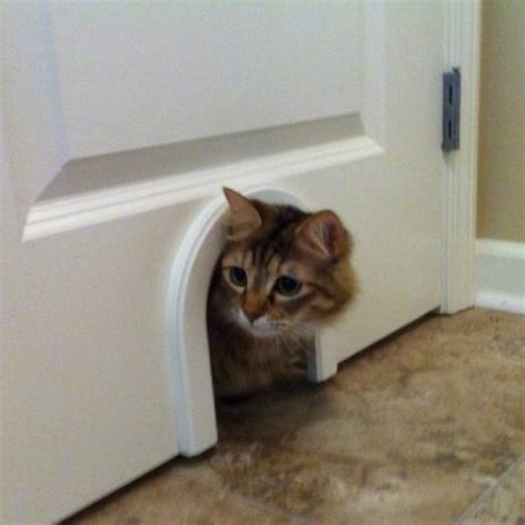 cat door install on door to laundry room to give cat access to