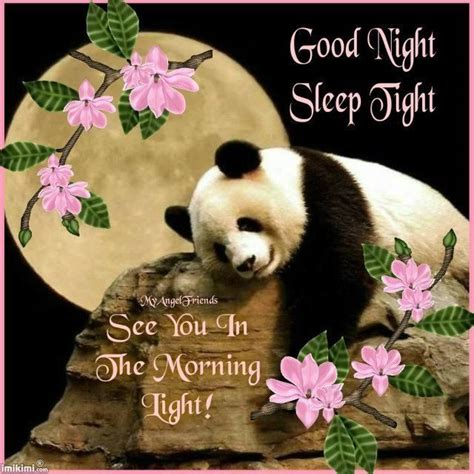 goodnight panda buenas good night sleep tight pictures photos and images for facebook and twitter