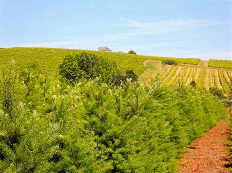 best oregon christmas tree farm tree farm property for sale in oregon