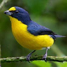 yucatan bird guide list and photos: birding at hacienda
