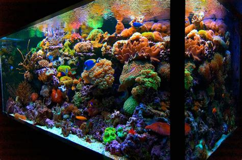 aquarium design group aquascape live coral amazing colors aquarium design group