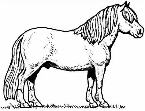 coloring pages of horses and dogs coloring pages of dogs cats and horses cat dog and cute