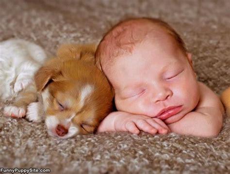 a baby puppy baby and puppy photos callmeiris