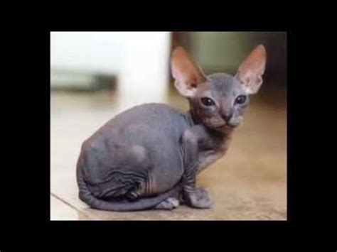 cheap haircuts rockingham epic funny cats 20 minutes youtube rachael edwards